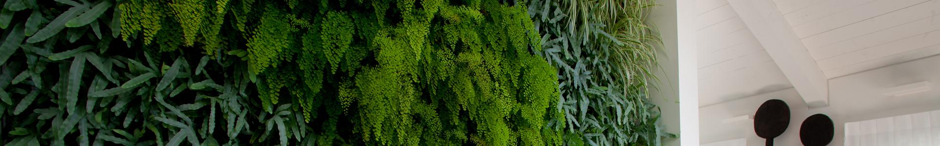 קירות ירוקים סוקולנטים