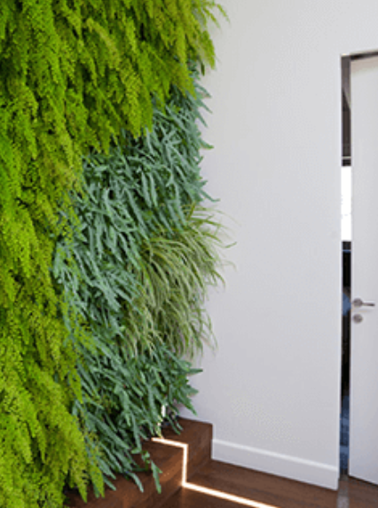 קירות ירוקים למשרד