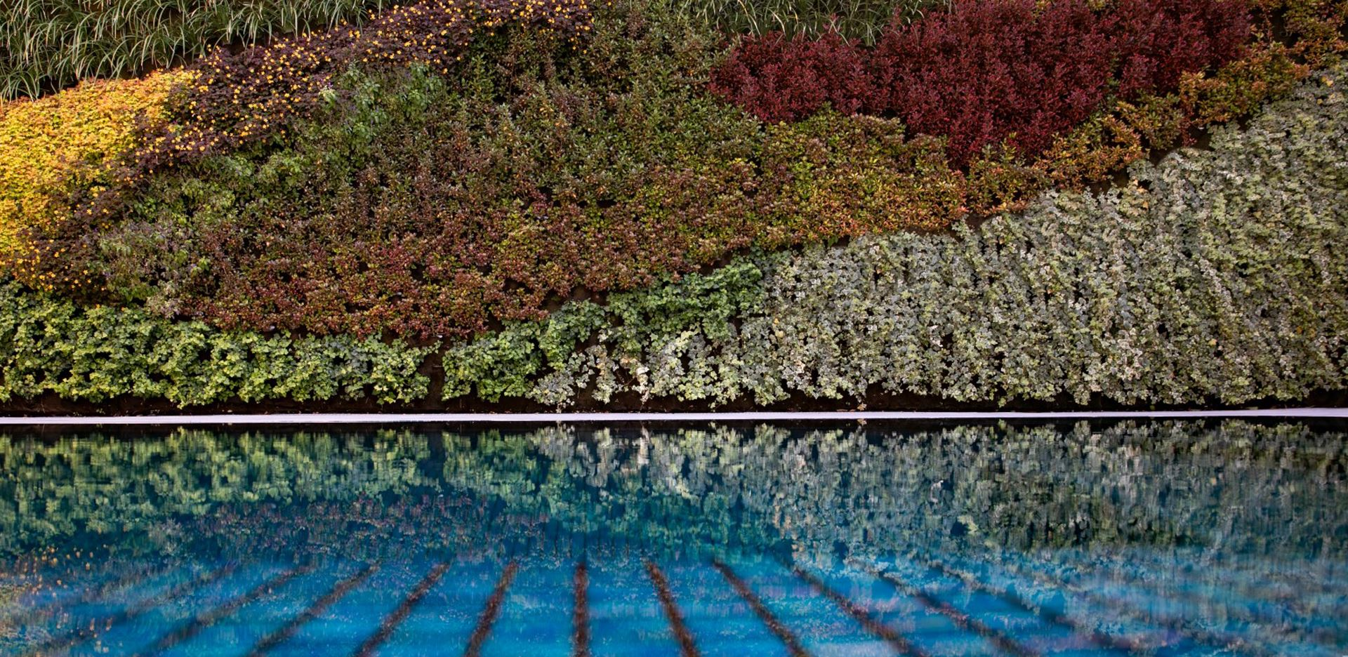 גינה ורטיקלית על שפת הבריכה
