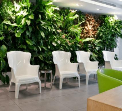 קיר צמחיה לבניין