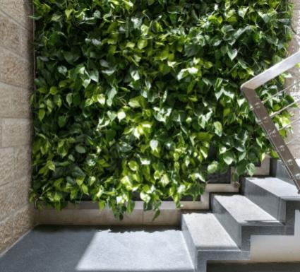 קיר צמחים ירוק לבית