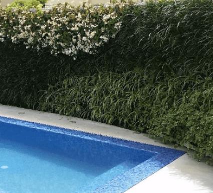 קירות ירוקים בעיר