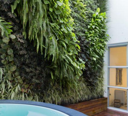 קיר צמחים