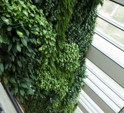 גינה על הקיר- בנייה ירוקה